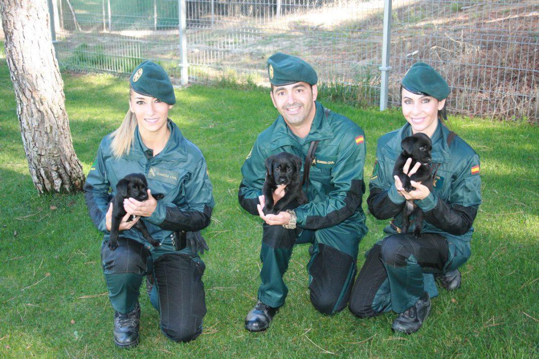 Guardia Civil guias caninos